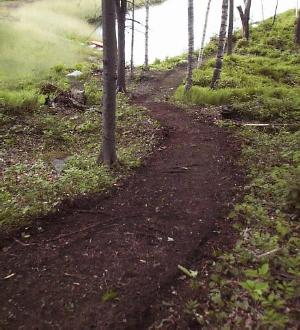 The Trail Building Machine Removes Small Sharp Stumps And Smooths Ground While Causing Little Disturbance To Roots Of Trees Along